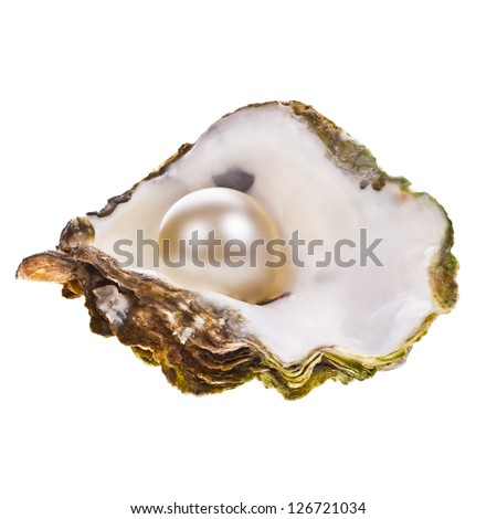 Big pearl in an oyster shell  Open Oyster Shell With Pearl