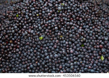 Big pile of fresh bilberries.