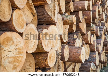 Big pile of logs - stock photo