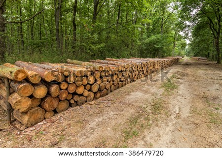 Big pile of wood in a forest road - stock photo