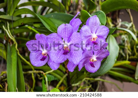 Big pink orchid - stock photo
