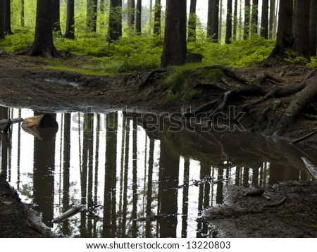 Big puddle in dark green forest. Spring sunny day - stock photo