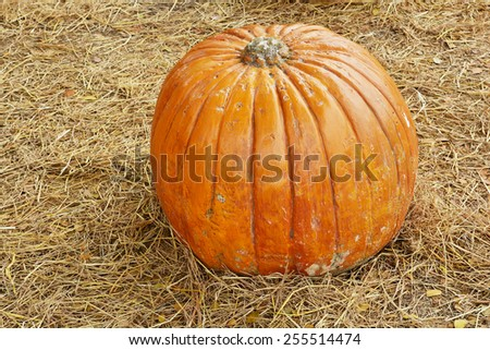Big Pumpkins and Fallen Leaves - stock photo