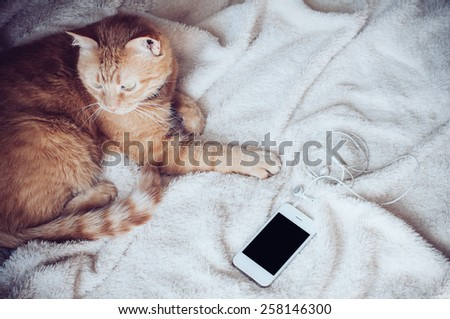 Big red cat lies on a soft beige blanket playing with a smartphone - stock photo