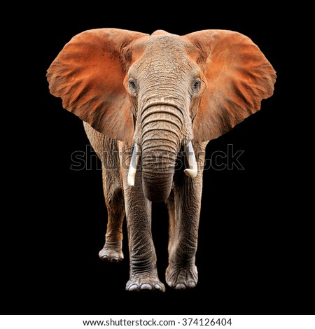 Big red elephant on black background - stock photo