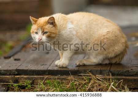 Big red the stray cat outdoors. - stock photo
