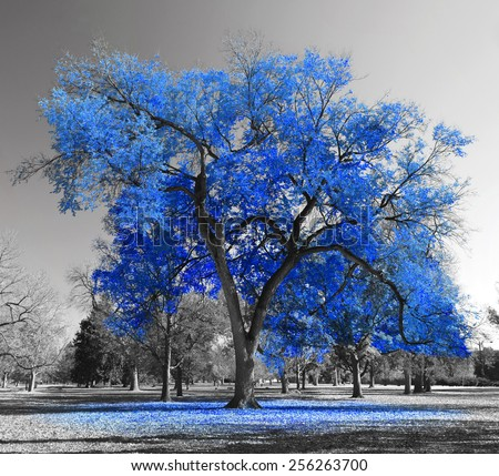 Big red tree in a black and white landscape - stock photo
