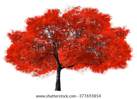 Big red tree isolated on white background - stock photo