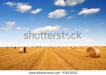 big round bales of straw in the field - stock photo