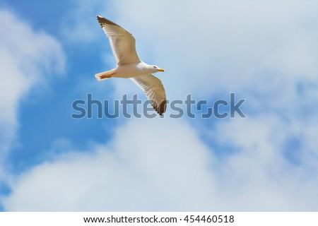 Big Seagull Soaring in the Cloudy  Sky - stock photo
