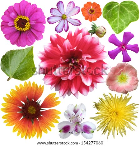Big Selection of Colorful Flowers Isolated on White Background - stock photo