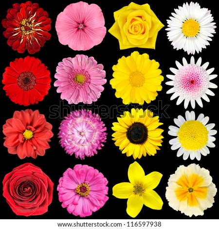 Big Selection of Various Flowers Isolated on Black Background. Red, Pink, Yellow, White Colors including rose, dahlia, marigold, zinnia, strawflower, sunflower, daisy, primrose and other wildflowers - stock photo
