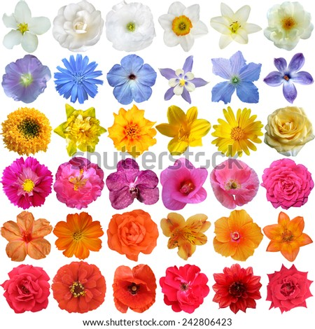 Big Selection of Various Flowers Isolated on White Background