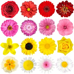 Free flowers stock photos stockvault big selection of various flowers isolated on white background red pink yellow mightylinksfo