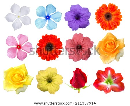 Big Selection of Various Flowers Isolated on White Background. Red, Pink, Yellow, White Colors including rose, gerbera, amaryllis, primrose and other wildflowers