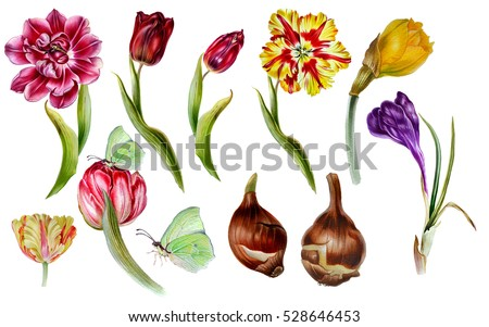 Big set watercolor spring flowers botanical stock illustration big set of watercolor spring flowers in botanical at style tulips narcissus crocus mightylinksfo