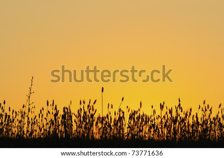 Big Sky with grass silhouette along bottom