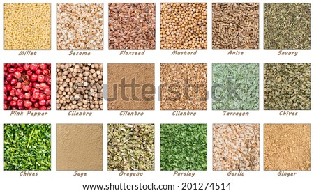 Big Spices and Herbs collection (all as seperate tiles with title) on white background - stock photo