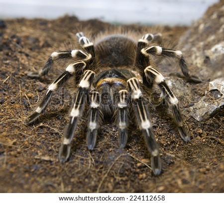 Big spider - stock photo