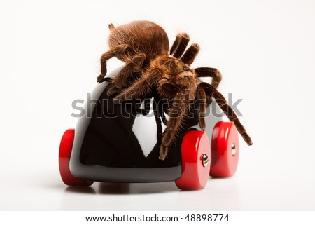 Big Spider on Toy - stock photo