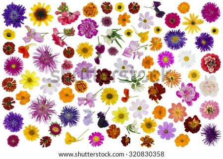 Big summer and autumn flowers set isolated collage - stock photo