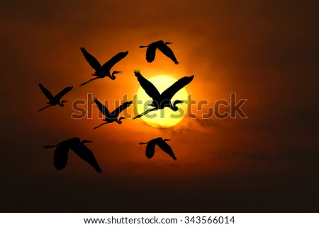 Big Sun in sunset,Under the concept of good leadership, teamwork ,Like birds flying through the the sun during the sunset
