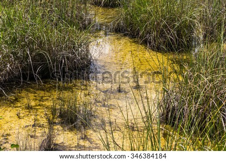 Big Swamp in Everglades National Park, Florida - stock photo