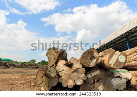 Big teak timber storage yard for raw material. - stock photo