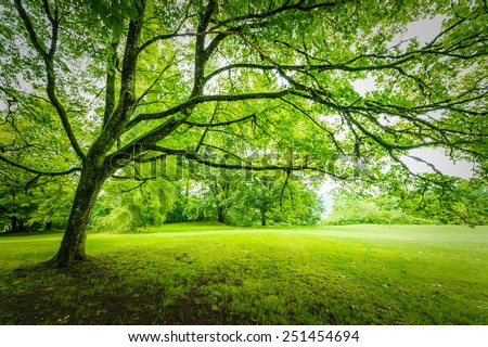 big tree - stock photo