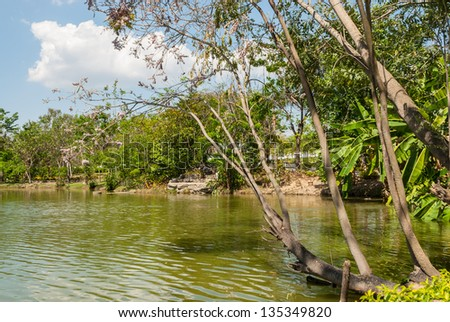 Big tree beside swamp - stock photo