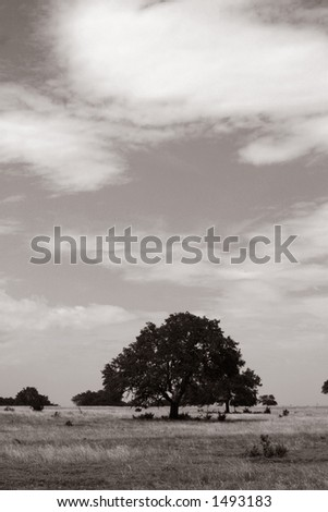 Big tree - black & white
