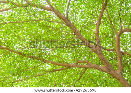 Big tree branch and green leaf in forest or public park. - stock photo