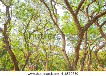 Big tree branch and green leaf in public park. - stock photo