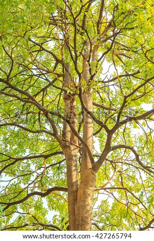 Big tree branch and green leaf in the forest. - stock photo