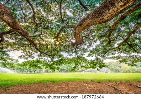 Big tree in a golf course. - stock photo
