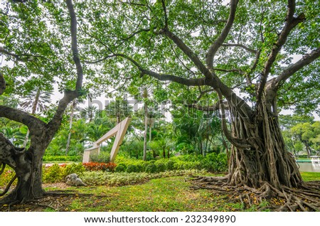 Big Tree in Chatuchak Park, Chatuchak district, Bangkok, Thailand. - stock photo
