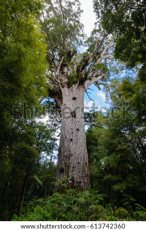 Tane Mahuta Big Kauri Tree Waipoua Stock Photo 53393317
