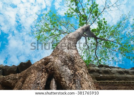 Big tree in Ta Prohm Temple, Angkor Wat, Cambodia, Southeast Asia - stock photo