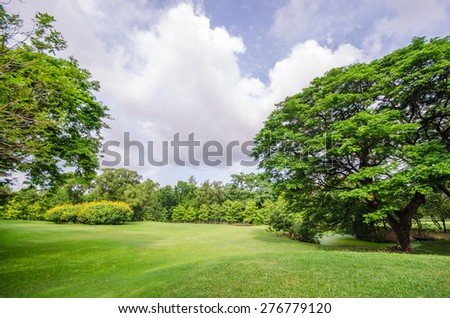 Big tree on green grass field - stock photo