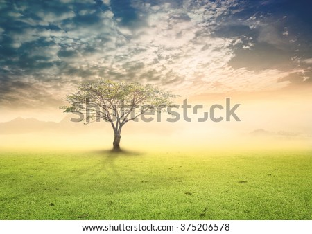 Big tree on meadow. Vintage Art Rural Grass Scenic Time Orange Yellow Eco Sun Plant Dawn Travel View Cloud Dawn Village Peace Calm Card Banner Bright Sunlight Blue Heaven Paradise Earthly Life Valley. - stock photo