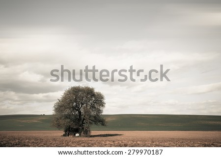Big tree over cloudy sky. Nature vintage background