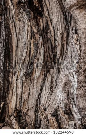 Big tree root. Close-up texture. - stock photo