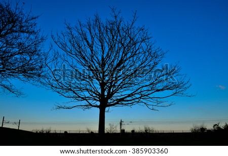 big tree with a bench in front of it and a blue cloudy sky in the background in a park