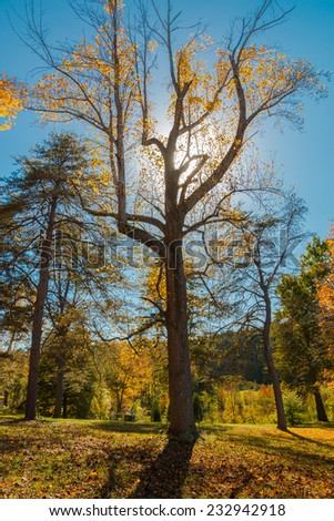 Big tree with interesting shape backlit in the park, autumn landscape. - stock photo