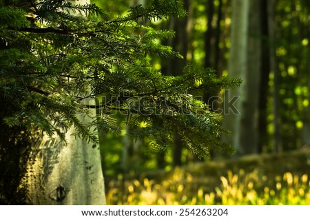 Big trees and brances in a dense forest, west Romania - stock photo