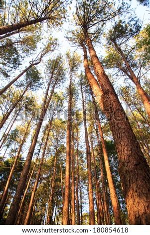 Big trees and sky - stock photo