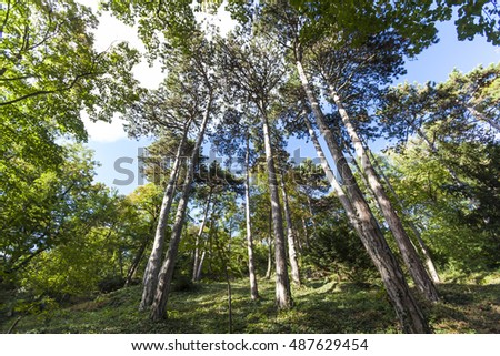 big trees in green forest