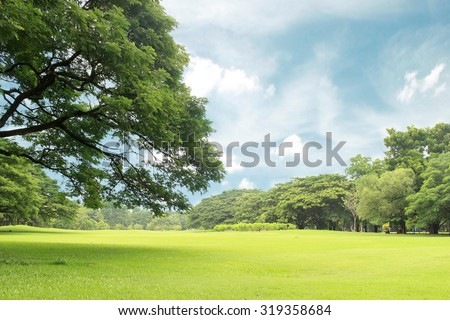 Big trees in the garden - stock photo