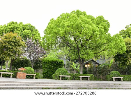 Big trees in the park. - stock photo
