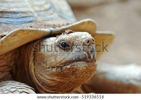 Big turtle in zoo